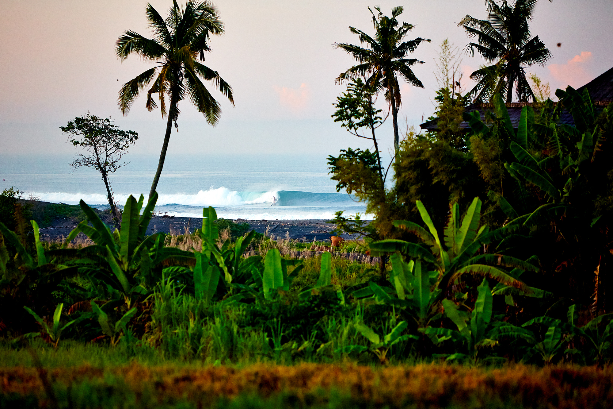 Canggu jungle lefts Aquabumps 5o0a5942