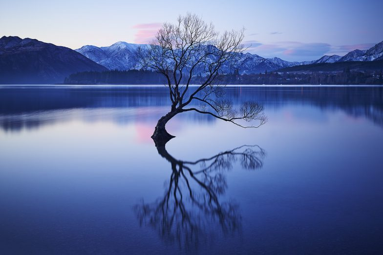 Wanaka Lake Tree Aquabumps cf005602