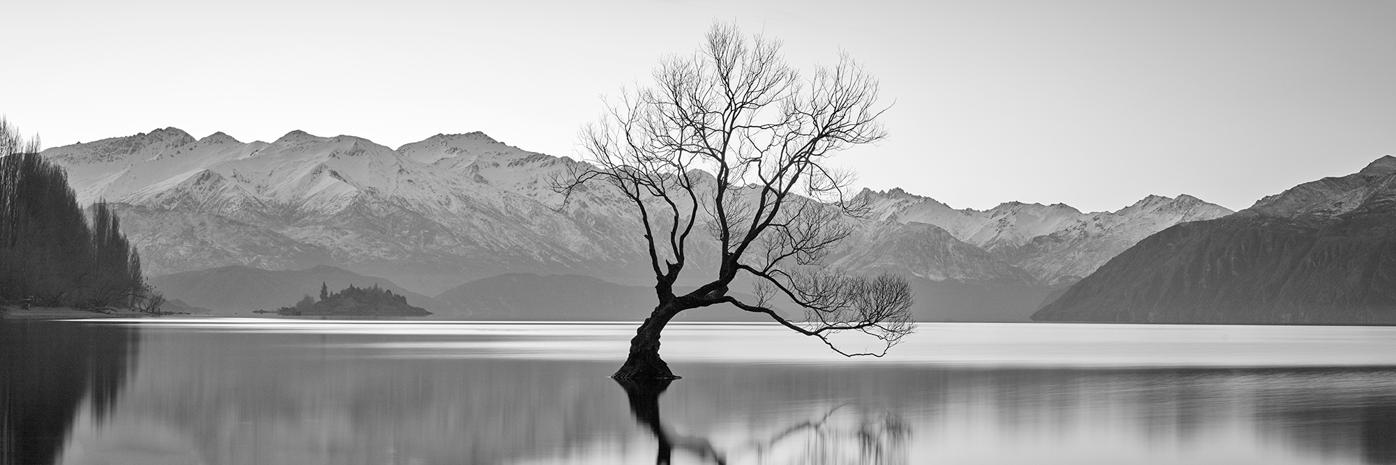 Tranquil Tree Aquabumps cf005610