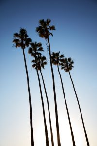 Missing those palms, Santa Monica