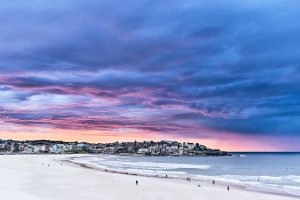We were given a little treat this morning...Bondi