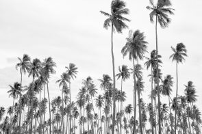 International Palm Tree Convention