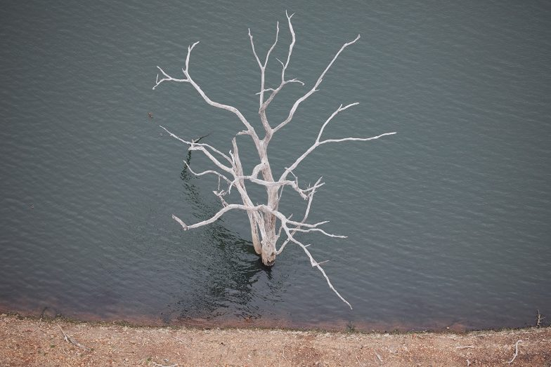 Trees grow in lakes? Lake Windamere