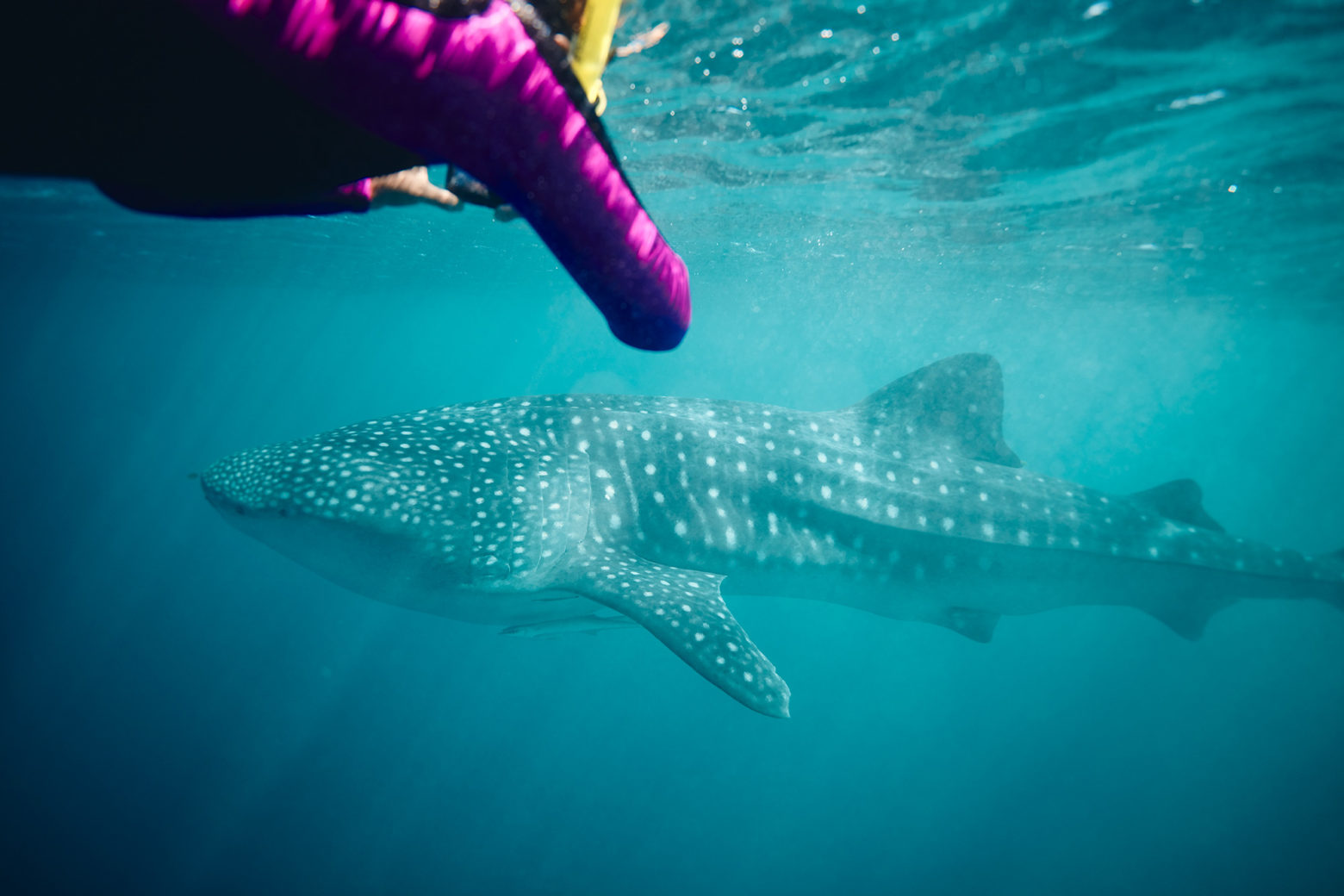 This is why people come from all over the globe. Ningaloo