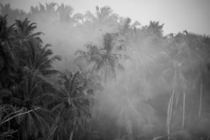 Smokey palms, Mentawais