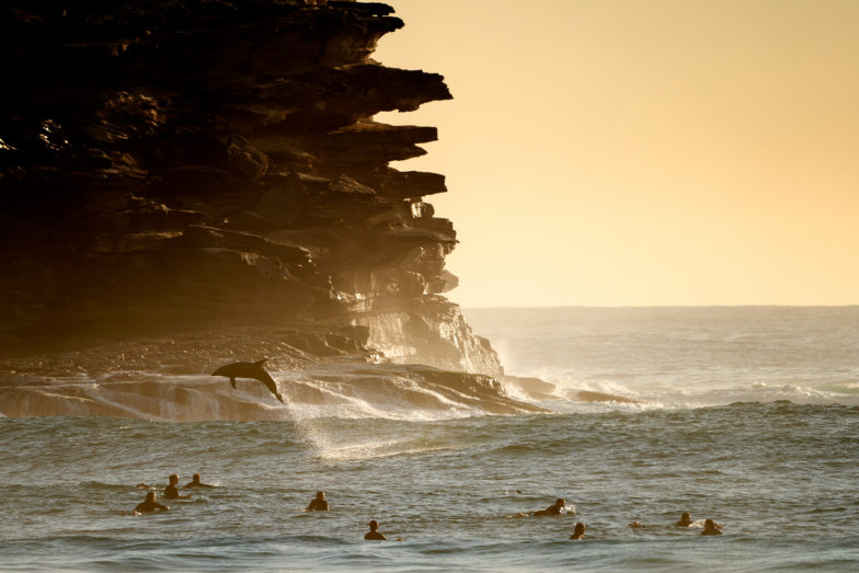 Dolphins putting on a show at Tamarama this morning - THANK YOU