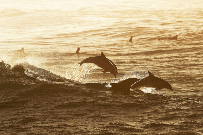 Party time, Dolphin style, South Bondi 7:45am