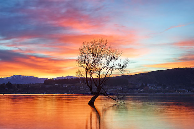 Lake Wanaka Tree, grew from a fence post (True)